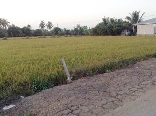 ขายที่ดินเปล่า 2 ไร่ ไกล้วัดสโมสรไทรใหญ่ ทางไปบางเลน นนทบุรี