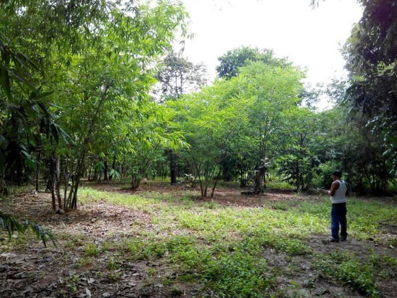 Land for sale in Korat ที่ดิน โคราช